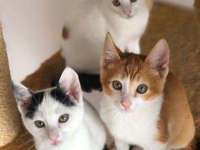 Vários gatinhos lindos